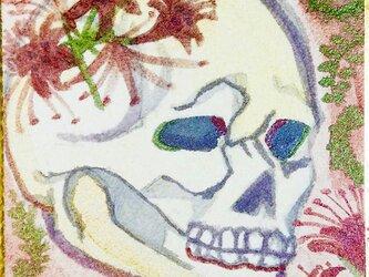 骸骨の開花。の画像