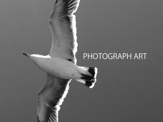 FLY W010   飛翔 羽 SKY  空 鳥 BIRD   希望 夢 生命 LIFE  の画像