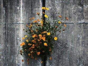 ALIVE  W018   生きている   FLOWER   花 LIFE   生命の画像