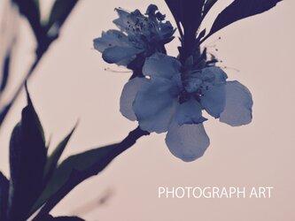 SILENT  W020   静   FLOWER   花 MORNING   朝の画像