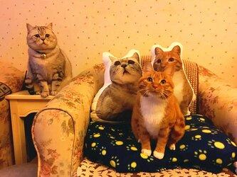 (お名前入りOK)✩オーダーメイド55cm✩ ワンちゃん、猫ちゃんのオーダークッションの画像