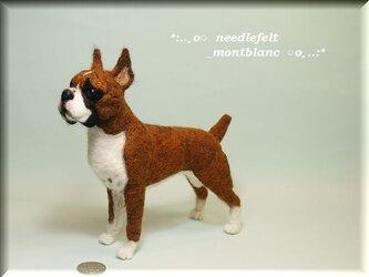 羊毛フェルト 犬 ボクサーの画像