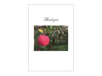 りんご畑の39cardの画像