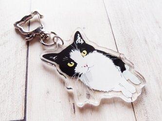 はちわれ猫のアクリルキーホルダーの画像