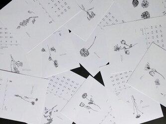 《80%OFF》植物語(しょくぶつがたり) カレンダー2020の画像