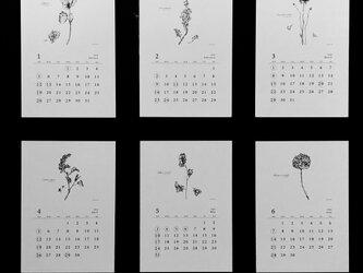 植物語(しょくぶつがたり)2020  ポストカードカレンダーの画像