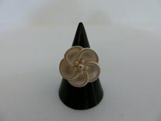 桐谷fashion図鑑!美しさの魅力が詰まった桐谷オリジナルの指輪の画像