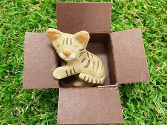 箱好き猫の画像