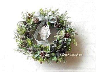 多肉植物のクリスマスフロストグリーンリース3(c083-3)の画像