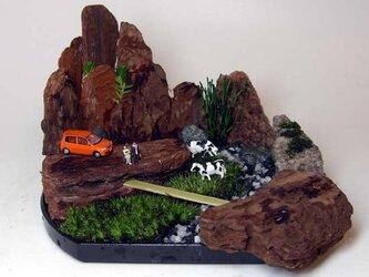 ハコニワグリーン(箱庭盆景)の画像