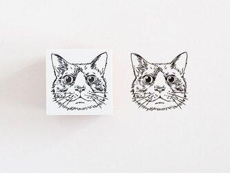 ラバースタンプ ハチワレ猫の画像