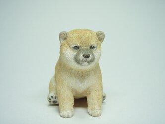 木彫り 柴犬 子犬の画像