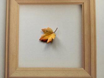 楓のピンバッチの画像