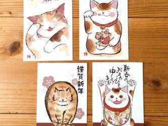 猫の年賀状:お得4枚セットの画像