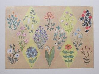 A4サイズ 包装紙/ラッピングペーパー 『花図鑑』30枚入りの画像