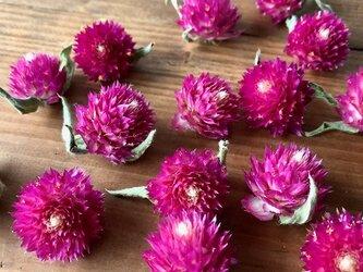 千日紅ヘッド15個 ピンク ラズベリーフィールド ドライフラワー花材 ハーバリウム リース ボタニカルキャンドルなどに 星月猫の画像