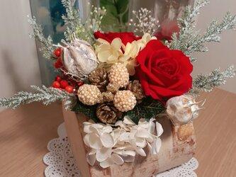 白樺クリスマスの画像