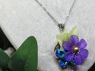 野牡丹       紫の花1輪の画像