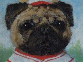 パグ・野球の画像