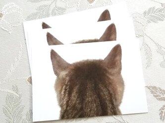 猫の後頭部ポストカード(トルン)の画像