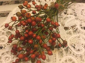 今季初、ノイバラの実枝付き10本の画像