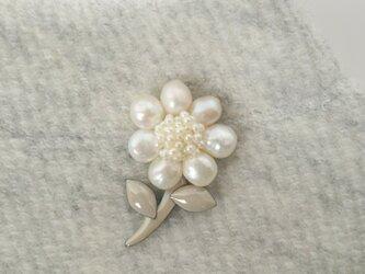ちーーさな真珠花の画像