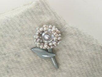 真珠のアルマジロ君の画像