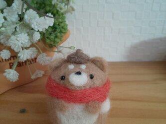 マフラーをしたつぶらな瞳のぽっちゃり柴犬さん  羊毛フェルトの画像