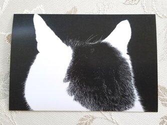猫の後頭部ポストカード(モモ)の画像
