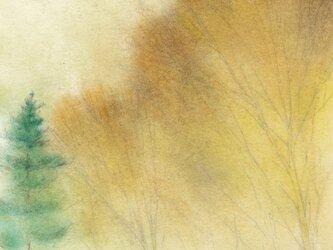 秋の森 (額縁付き)の画像