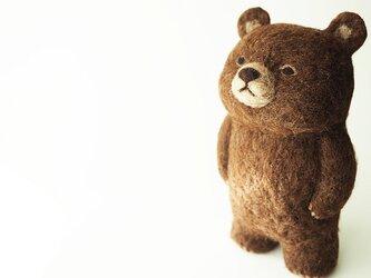 BROWN BEAR (standing)の画像