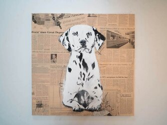Dalmatian / ダルメシアンの画像