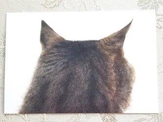 猫の後頭部ポストカード(トルン2)の画像