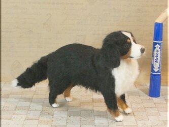 羊毛フェルト 犬 バーニーズ・マウンテン・ドッグ 犬フィギュアの画像