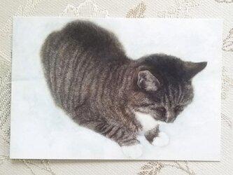 猫のポストカード(おすわり)の画像