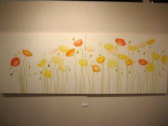 花畑 -ポピー-の画像