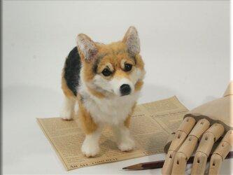 羊毛フェルト 犬 コーギーさん ウェルシュ・コーギー 犬フィギュアの画像