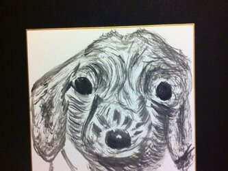 守りたくなる犬の画像