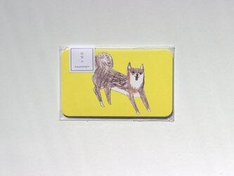 柴犬のメッセージカードの画像