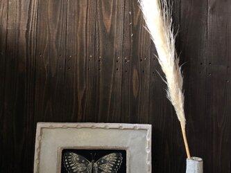 パンパスグラス Bクラス  ドライフラワー 花材 オフホワイト ふわふわのボリューム感が違います インテリアなどに★星月猫の画像