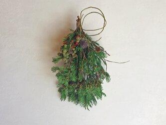 針葉樹のスワッグの画像