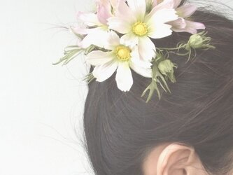 白とピンクのコスモス M * シルク製 * コサージュ 髪飾りの画像