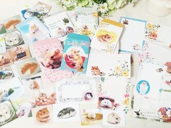 新作!写真全部セット★ハムスターポチ袋&カード&シール★の画像