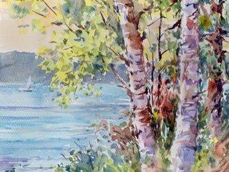 注文制作します 水彩画原画 白樺の湖畔15(#389)の画像