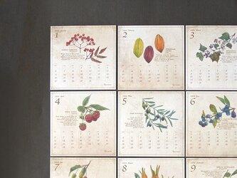 木の実の図鑑風カレンダー2020の画像