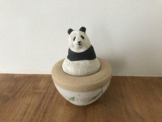 カノプス壺 パンダの画像