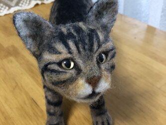 羊毛フェルトの猫の画像