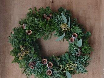 ユーカリの実のクリスマスリースの画像
