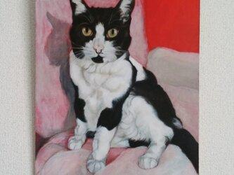 猫イラスト「赤い猫」原画の画像