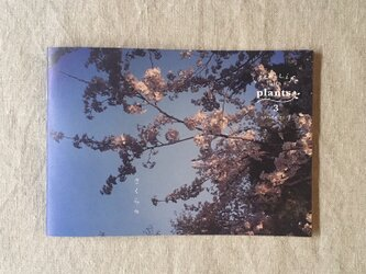 ideallife with plants 〜植物はたのしい。〜 3号「さくら」の画像